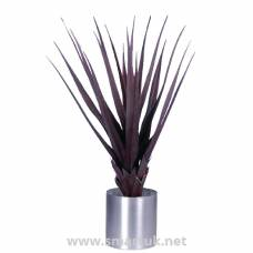 Pandanus Red 900mm
